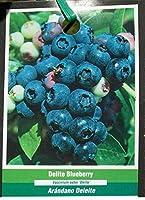 有機種子だけでなく、植物:Delite甘いベリーHethy低木栄養ヘスBY FERRY