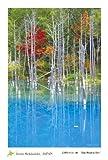 "PC-219 北海道 風景 名所 はがき ポストカード 美瑛町 青い池 1枚入 【 Postcards from Hokkaido, JAPAN -a piece- "" Blue Pond in Biei "" 】"