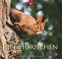 Eichhoernchen 2020: Mittelformat-Kalender
