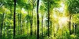 絵画風 壁紙ポスター (はがせるシール式) 森林 パノラマ 森林浴 日光浴 陽射し 太陽 緑の森 目の保養 癒し キャラクロ SNR-101S1 (1152mm×576mm) 建築用壁紙+耐候性塗料