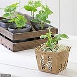 (観葉)緑のカーテン 野菜苗 ゴーヤ(品種おまかせ) 3号(お買い得3ポットセット) 家庭菜園 [生体]