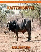 Kaffernbueffel: Tolle Bilder & Wissenswertes ueber Tiere in der Natur