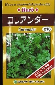 □コリアンダー パクチー 香菜