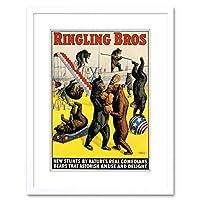 Ad Circus Ringling Bros Bears Box Stunt Framed Wall Art Print