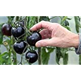 200pcsの黒トマト種子野菜や果物の観賞植物の木の苗