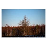 裸の森3のティンサイン 金属看板 ポスター / Tin Sign Metal Poster of Bare Forest 3