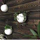 Pack of 3 White Pots Ceramic Planters, Wall Mountable Vase, Wall Hanging Succulent Pots, Decorative Ceramic Flower Planters(4