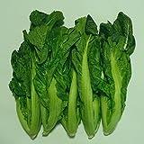 タカナ(高菜)約2-5株 約1.5Kg 福岡産