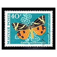 Postage Stamp Hungary 40 Forint Striped Tiger Moth Art Print Framed Poster Wall Decor 12X16 Inch 送料切手ハンガリーポスター壁デコ