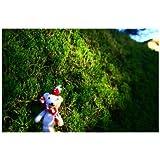 ポストカード「くまの・熊縫いぐるみ」Postcard-絵はがきハガキ葉書