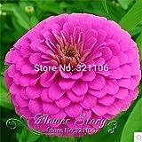 100キンセンカの花の種菊長寿混合バルコニーガーデンポット植えの種子キンセンカ送料無料