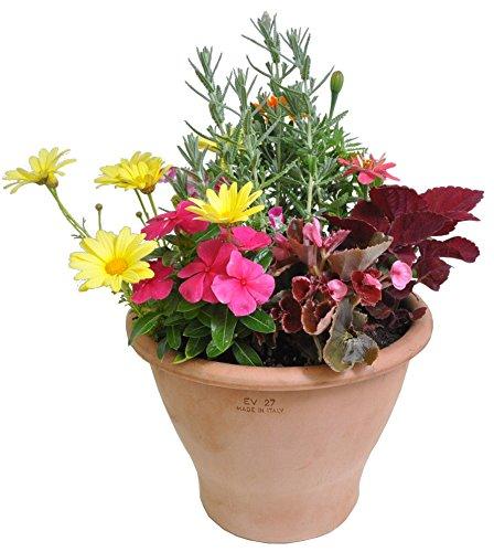 季節の鉢植え アンティーク9号鉢(イタリア製)