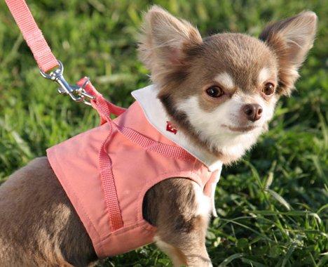 犬と生活LifewithDogs『ボディハーネスセーラーマリン』