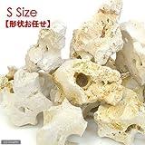 化石サンゴ S(ベース用)1個 15~20cm