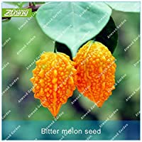 種子ZLKING 10PCS家庭菜園のためのモモディカ野菜ビターメロン盆栽植物急成長花
