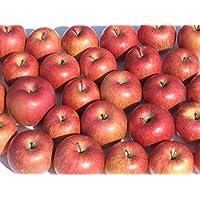 【訳あり・ジュース用】岩手県産 りんご 10kg (ジュース用・果肉柔らかめ)