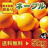 熊本産 訳あり ネーブル 5kg  【 九州 熊本 網田 みかん ミカン オレンジ 柑橘 】