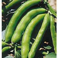 【メール便配送】国華園 野菜たね ハーブSAIS ソラマメ グラノ 1袋(40ml)【※発送が国華園からの場合のみ正規品です】