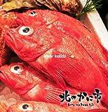北海道極上釣りきんき(生キンキ 大型 500g超)/尾【北海道海鮮グルメ・お祝いギフト特撰商品】
