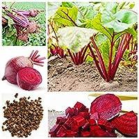 種子パッケージ: 成長すると50個ビートルートシードレア有機野菜の種子庭の装飾工場屋外簡単