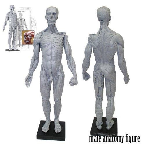 アナトミー(人体模型)フィギュア 男性Ver,2