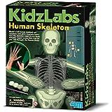 [4M]4M Glow Human Skeleton Science Kit 4933 [並行輸入品]