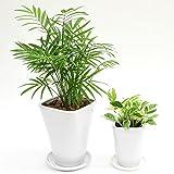 選べる観葉植物 陶器鉢2点セット(【4号】テーブルヤシ×【3号】ポトスエンジョイ)