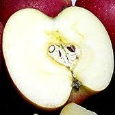 青森産 藤崎町マル組りんご園のサンふじ 10kg 小玉46個入り 有機肥料100%・減農薬栽培採用