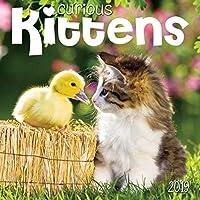 Curious Kittens 2019 Wall Calendar [並行輸入品]