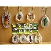 好奇心倶楽部 ホンモノ 昆虫 標本 コレクション 8種 カメムシ 全8種 1 ツマベニルリタマムシ2 ヤツボシハン