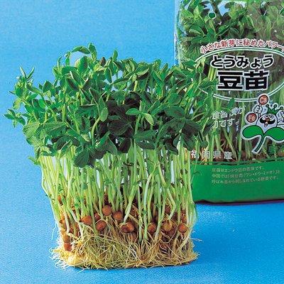 スプラウト 種 【 豆苗(とうみょう) 】 種子 1L