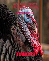 Facts About Turkeys A Picture Book For Kids