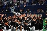 千葉ロッテマリーンズ オフィシャルDVD 2010 「和」の結実 逆転日本一への軌跡! 画像