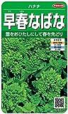 サカタのタネ 実咲野菜3170 早春なばな ハナナ 00923170