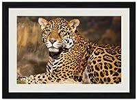 ヒョウ#0003動物の写真木製黒額縁アートポスター(40cmx60cm)