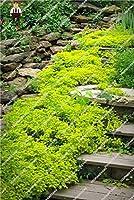 忍び寄るタイム種子ブルーロッククレス種子 - 多年生の地上カバー花、ホームガーデン50ピース/バッグのための自然な成長:ブルゴーニュ