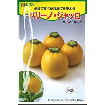 ズッキーニ 種子 パリーノ ジャッロ (10粒)
