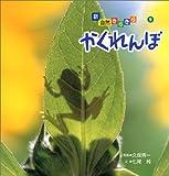 かくれんぼ (新・自然きらきら (9))