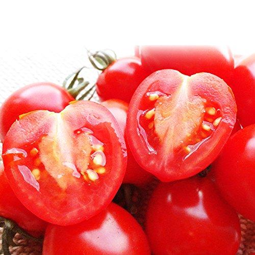 北海道 名寄産 完熟トマトベリー 約1.5kg ミニトマト