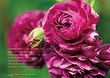 オーガニック・ローズ 358: 私が育てたおすすめの無農薬バラ 画像