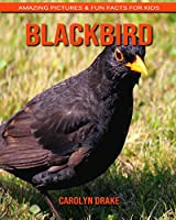Blackbird: Amazing Pictures & Fun Facts for Kids