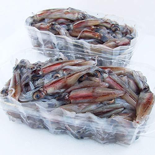 [生冷凍]蛍烏賊(ホタルイカ)1kg(500g×2)セット山陰沖産A級品フォーシーズン