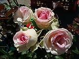 バラ苗 ミミエデン 大苗 木立バラ 【京成バラ】 四季咲き ピンク 薔薇 バラ苗木