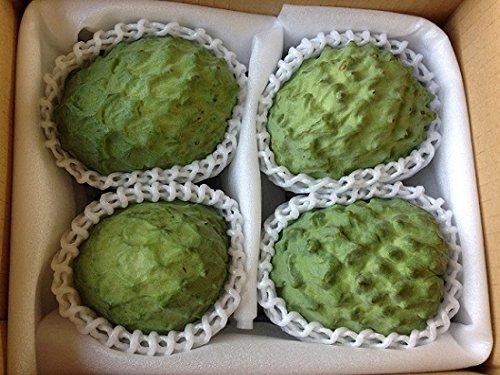 訳あり【期間限定】 アテモヤ (アフリカン プライド) 約1kg (2〜4個) 中村果樹園 森のアイスクリーム 低カロリー・低脂肪 珍しい南国フルーツ