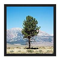 Highsmith Lone Tree Yosemite Landscape Photo Square Wooden Framed Wall Art Print Picture 16X16 Inch 木景観写真木材壁画像