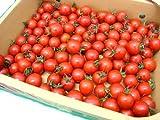 """フルーツミニトマト """"キャロルセブン"""" 約1kg 和歌山産(冷蔵便)【予約 11月以降】"""
