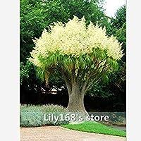 10種/パックシード種子装飾的な中庭、とてもbeautyful