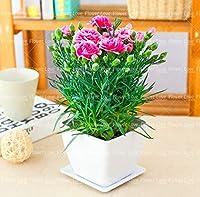 50個/ロットオフィスのデスクトップの花ユールPseudotruncatellaリビングストーンリソップジューシーな抗放射線浄化空気を浄化:8