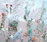 海辺の花屋