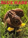 野ウサギの四季―BLUE HARE